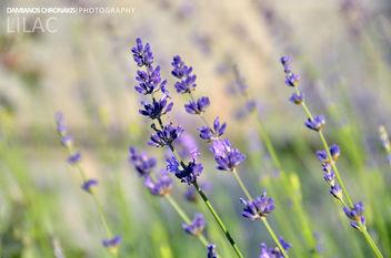 Lilac - image #287021 gratis