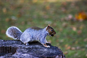 squirrel with acorn - image #287261 gratis