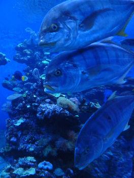 Pile O' Fish! - Free image #287271