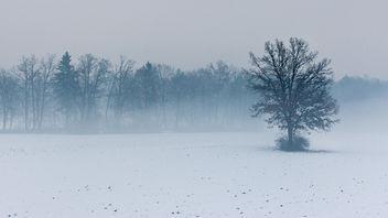 Misty field - Free image #287341