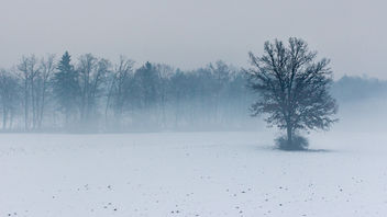 Misty field - image #287341 gratis