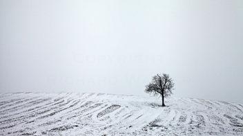 Snowy Tree - image #287591 gratis