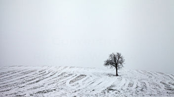 Snowy Tree - Free image #287591