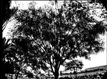 desert tree - Kostenloses image #287621