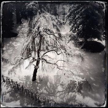 Last Snow ... Promise! - Free image #288081