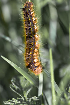 worm - Kostenloses image #288421
