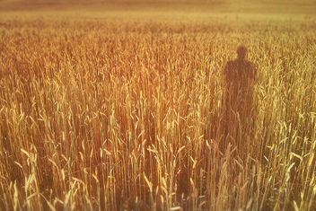 The Catcher in the Rye - Free image #288931