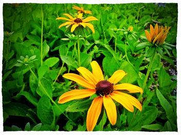 Summer Flowers - Kostenloses image #288981