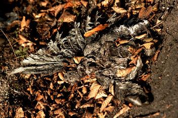 Dead bird - image gratuit #289321