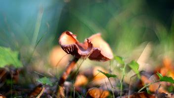 Mushroom - Free image #289451