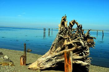 Beach - Free image #289481