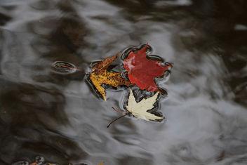 downstream flow - Kostenloses image #289501