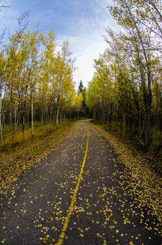 Path - Free image #289541
