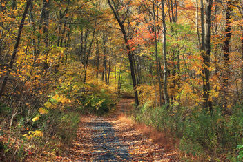 Appalachian Trail: Totts Gap to Mount Minsi (2) - Free image #289821