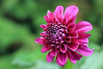 Purple autumn - image #289931 gratis