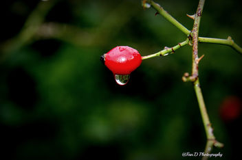 A drop of water is enough..... - Kostenloses image #290021