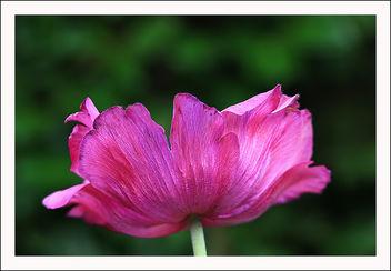 Pink - Kostenloses image #290891
