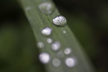 rain drops - image gratuit #291211