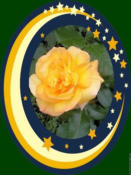 Rose - image gratuit #291641