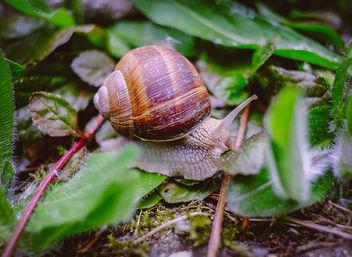 Snail - Free image #291651