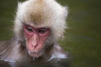Baby Bath - Kostenloses image #291661