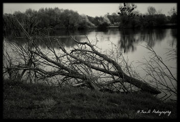 A tree branch lying along the Moselle - image #291921 gratis