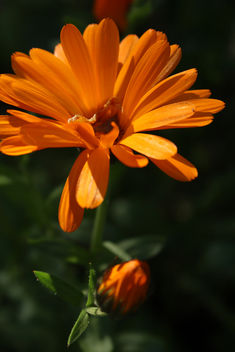 Close up flower - image gratuit #292031