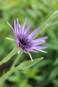 Purple spring - image #292071 gratis