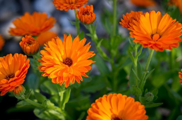the flower III - image #292301 gratis