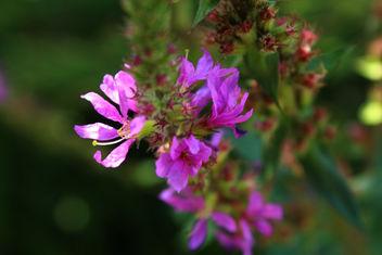 Tiny flower - Free image #293301