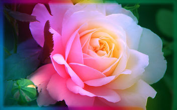 Softness - Free image #293471