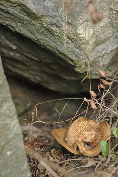 Mushroom caves - Free image #293811
