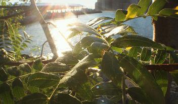 Pier Plant - Free image #293871