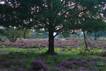 Purple pastures - Free image #293881