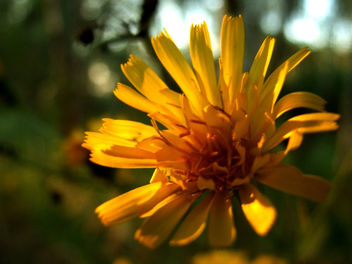 Wild Flowers: Yellow - image gratuit #293921