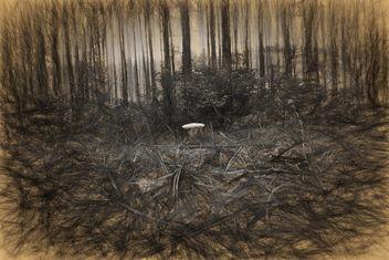 A mushroom - Free image #293971