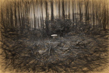 A mushroom - Kostenloses image #293971