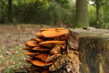 Mushroom Bed - Kostenloses image #294221