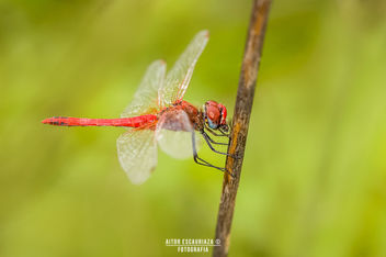 DragonFly... - Free image #294471