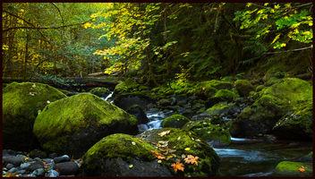 Autumn Stream.jpg - Free image #294581