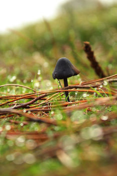 Tiny mushroom - Free image #294601