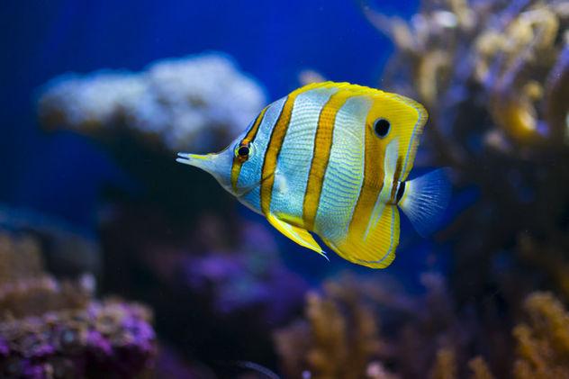 Fish - Kostenloses image #294681