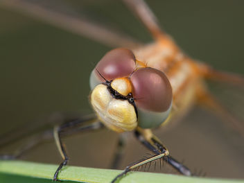 Dragonfly - Free image #294841