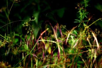 Green Escape - бесплатный image #294881