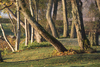 Trees - image gratuit #295091
