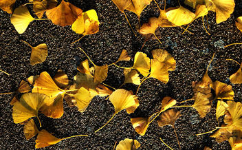 Small yellow leaves on tarmac - Free image #295101