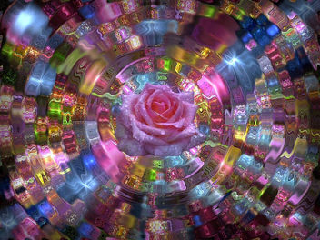 Ripple Rose - Free image #295131