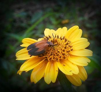 sunflower ranger - image #295251 gratis