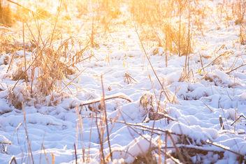 Sneeuw in de Broekpolder - Free image #295481
