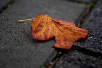 Lonely on the sidewalk - image gratuit #295591